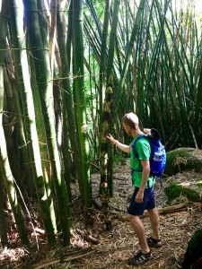 Bamboo requires a good balance of wind, water, and sunlight to grow sturdy. Much are your bones like bamboo, they require a sprinkle from every pot to help them grow incomparably strong