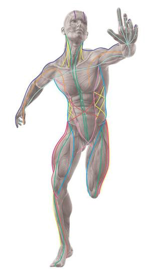 anatomy trains what is structural integration