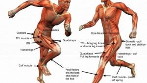 understanding-tfl-injury-33n9fajsksp3m7quqbkm4q
